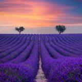 Valensole Provence