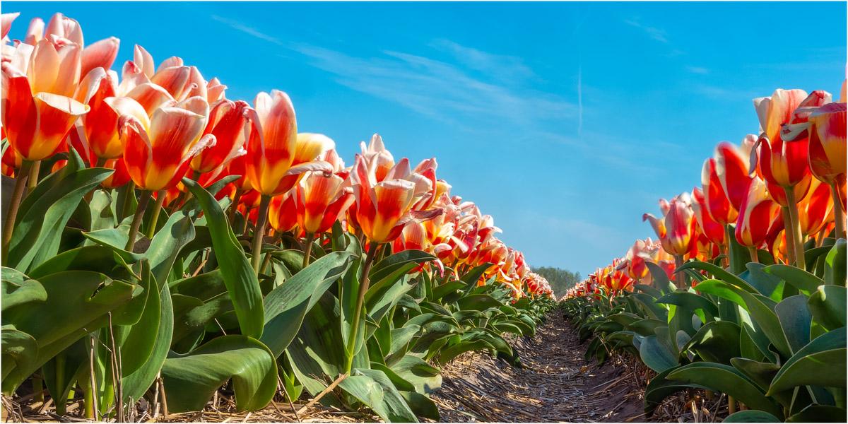 Holland im Frühling